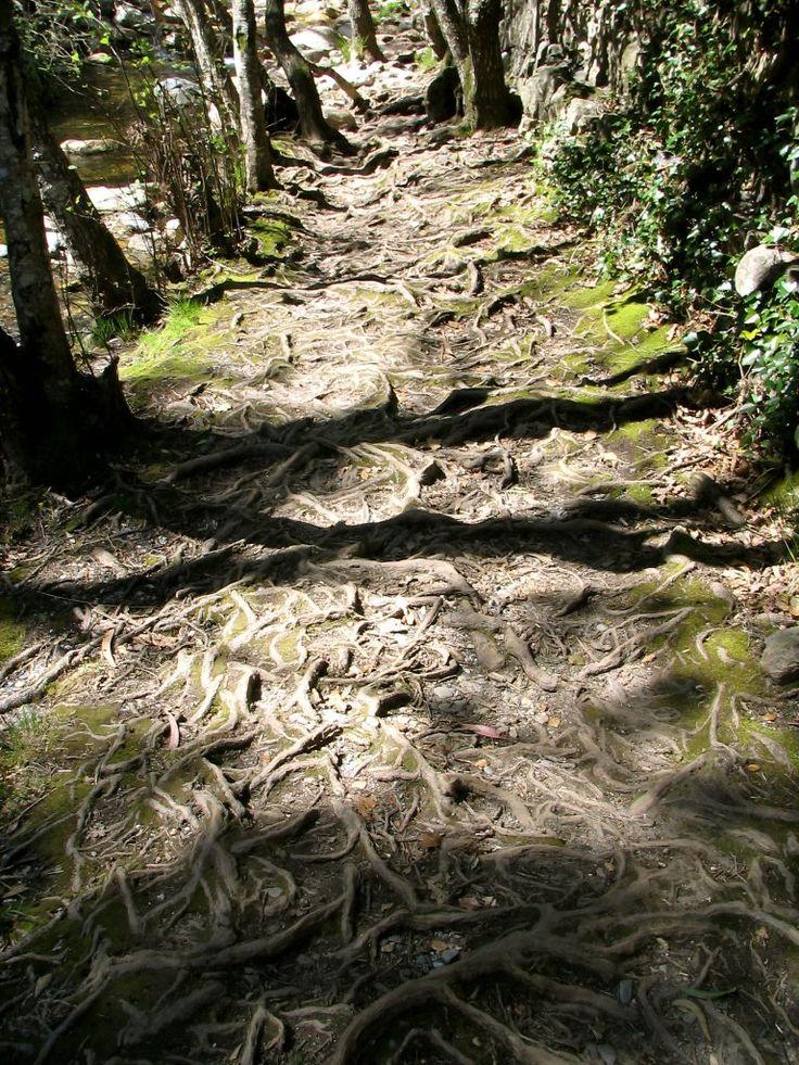 En el camino que nos lleva hacia unos abrigos con pinturas rupestres ...