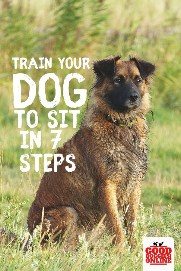 How To Train Your Dog To Sit Dog Training Techniques Training