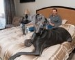 giant George -- guinness record tallest dog in the world