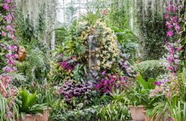 New York Botanical Garden - The Orchid Show