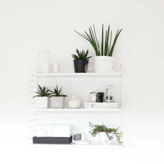 My plant shelfie