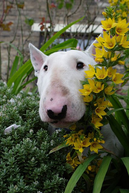 Spud in the flowers | Flickr - Photo Sharing!
