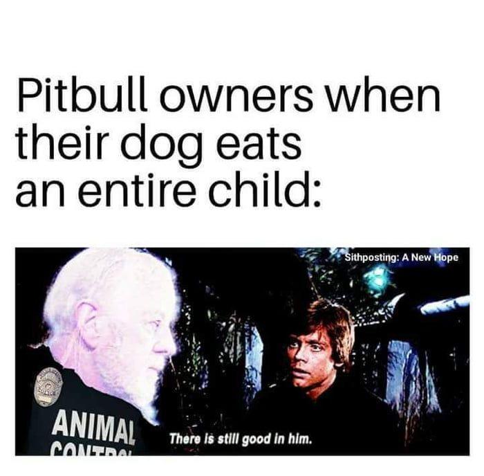 Pin On Pitbull Memes