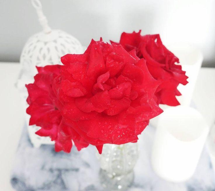 Dzień dobry  Nowy tydzień  nowe wyzwania udanego tygodnia ;) Ps. To już ostatnie róże z własnego ogródka ;( #fall #autumn #flowers #rose #interior #white #blogger #beautyblogger #jesień #róże #blogerka #blogerkaurodowa #instadaily