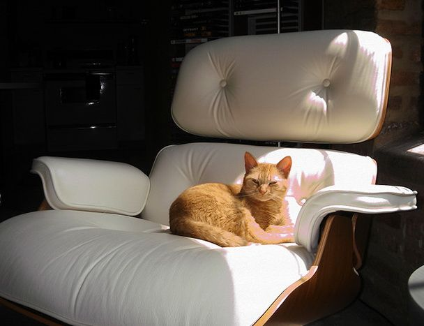 Ginger cat on white Eames Lounge chair