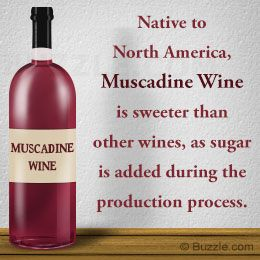 Homemade Muscadine Wine Recipe