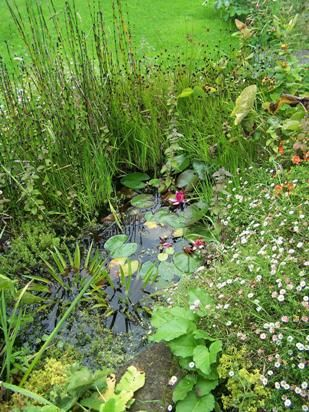 A little pond for the Newts and frogs.