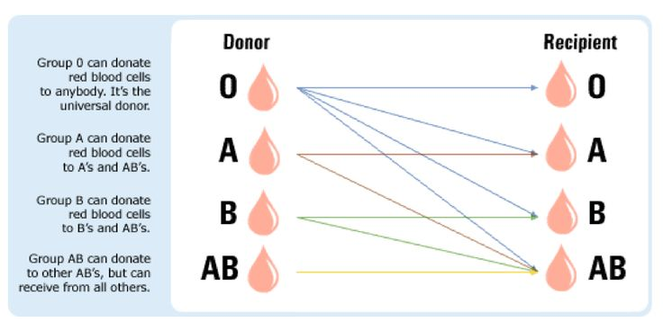 Blood Types Info and Chart. #humanbody #learnaboutblood The ABO Blood Group System  There are four major blood groups determined by the presence or absence of two antigens – A and B – on the surface of red blood cells. #donateblood #bloodinfo #STEM #bloodfacts http://www.redcrossblood.org/learn-about-blood/blood-types #bloodtypes http://www.redcrossblood.org/learn-about-blood #AmericanRedCross