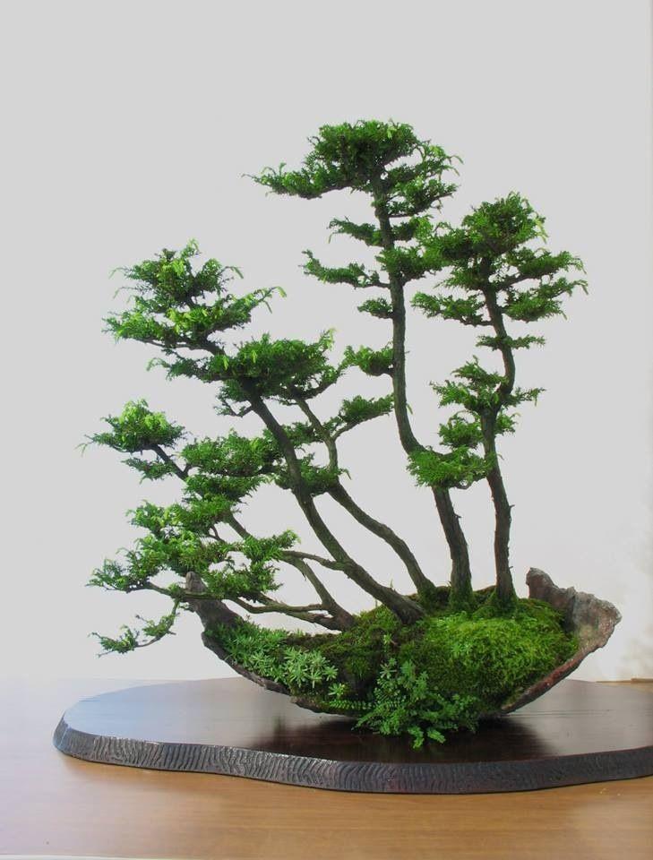 Bonsai Baum Garten : 107 besten bonsai bilder auf pinterest bonsai blumen ~ Lizthompson.info Haus und Dekorationen