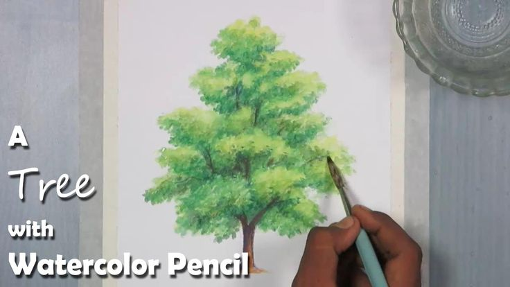 How to Paint A Tree with Watercolor Pencil