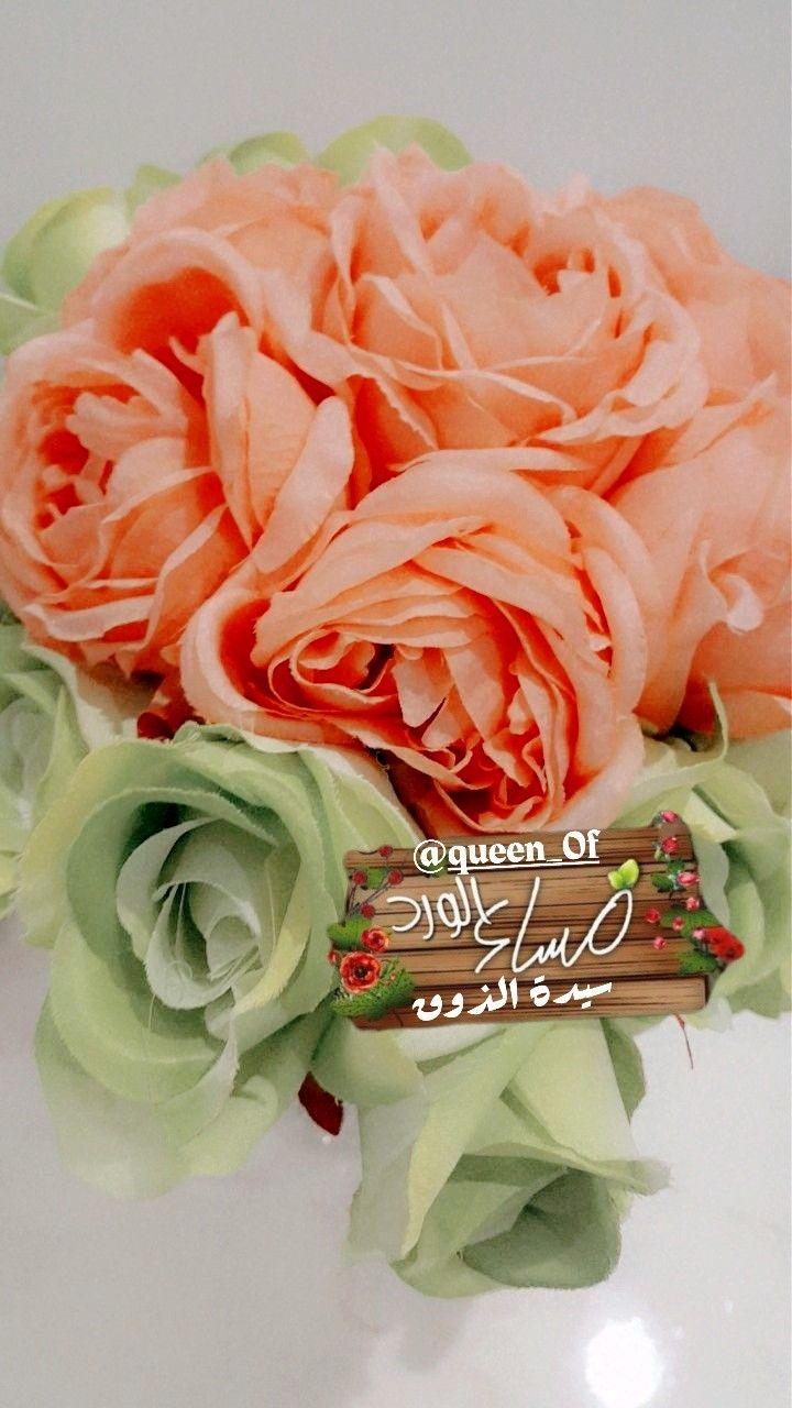 Pin By سيده الذوق On سناب شات سنابي تابعوني Flowers Plants Rose