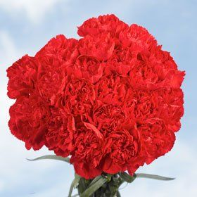 Cheap Red Carnations | 200 Red Carnations Global Rose