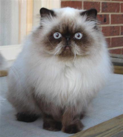 This looks like my Maddie, only with fur.