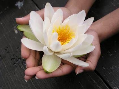 Картинки по запросу lotus flower in hands