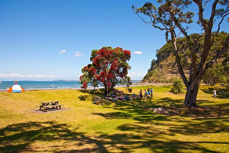 Puhutakawa Tree, Wenderholme Park, see more at New Zealand Journeys app for iPad www.gopix.co.nz