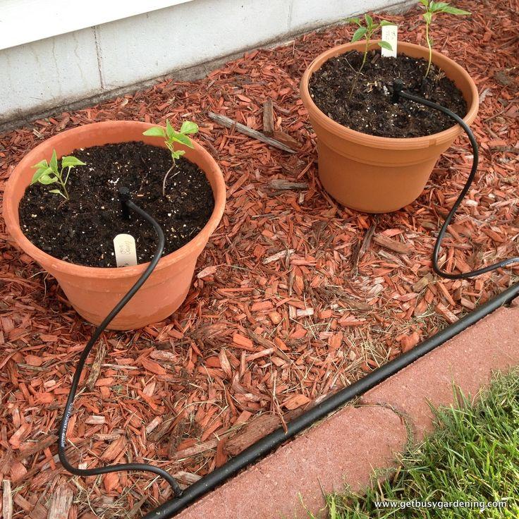 Easy DIY Drip Irrigation System