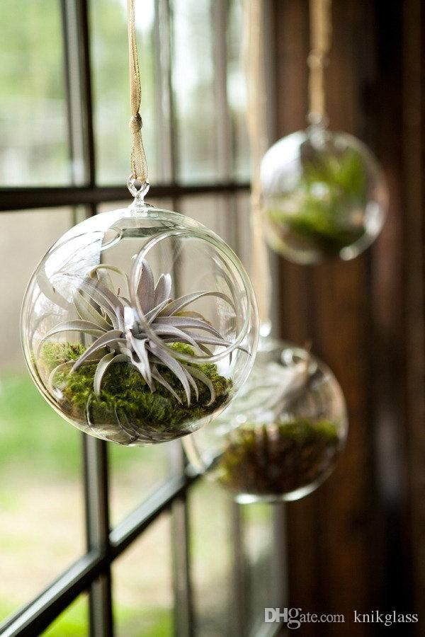 I Found Some Amazing Stuff Open It To Learn More Don T Wait Https M Dhgate Com Product 6pcs Lot Beautiful Glass Hanging Air Plants Plants Air Plants Decor