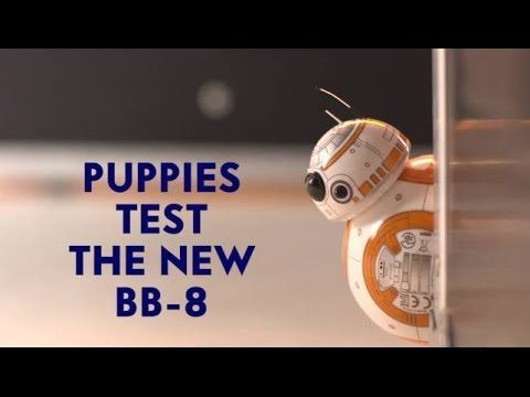 Adorable Puppies Playing With the New 'Star Wars: The Force Awakens' BB-8 Rolling Droid Toy