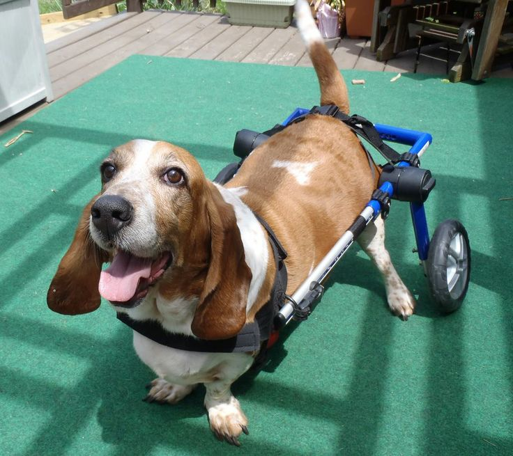 Learn More About Dog Wheelchairs Products Services And Support For Elderly Disabled Injured Pets