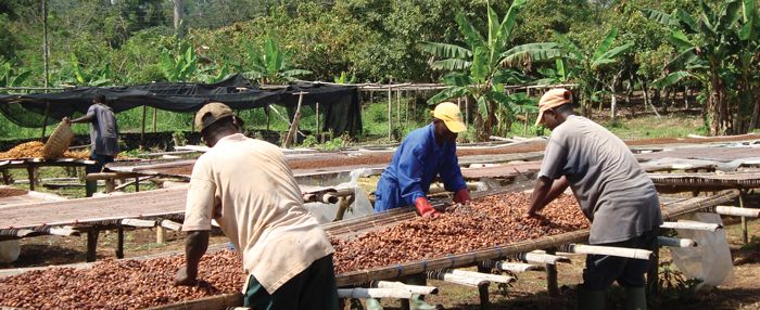 Cocoapro® is a patented process for preserving flavanols, but it is more than this. The Cocoapro® process has enabled an entire research program into the potential impact of cocoa flavanols on human health, a program that continues today. Vitalize has this process with 150 mg of cocoa flavanols