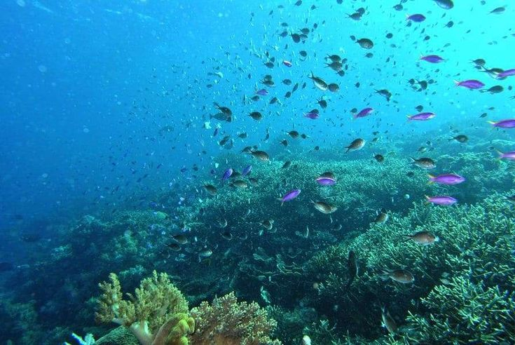 Komodo National Park (Nusa Tenggara Timur, インドネシア) コモド島とその周辺(Shin  Okamotoさん) #komodo #indonesia