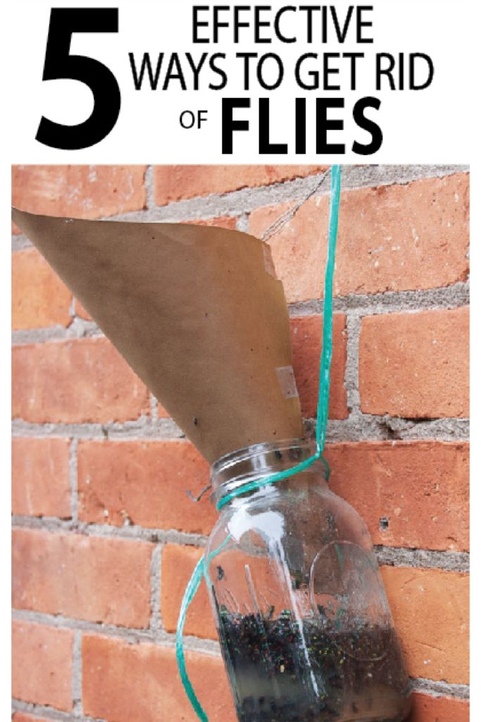 22215 Best Diy Gardening Ideas Images On Pinterest