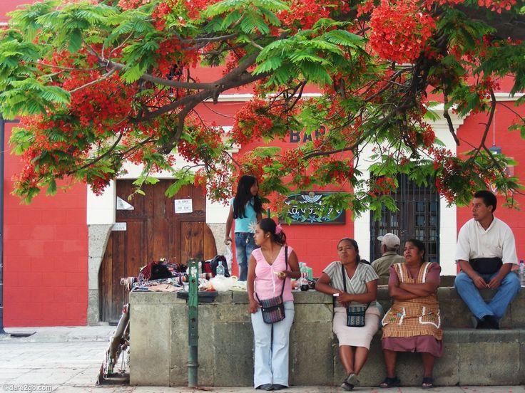 Street vendors relax under a #Poinciana tree in #Oaxaca in #Mexico.