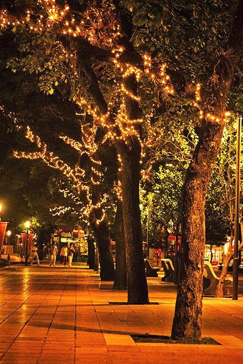 San Miguel de Tucuman Argentina. Plaza Independencia, en época navideña.HERMOSO LUGAR PARA VISITAR.
