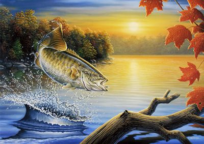 Https Www Google Com Search Biw 1346 Fishing Pictures