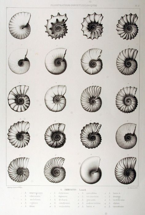 229 best Sciences Physique, Chimie images on Pinterest - best of tabla periodica julius lothar meyer