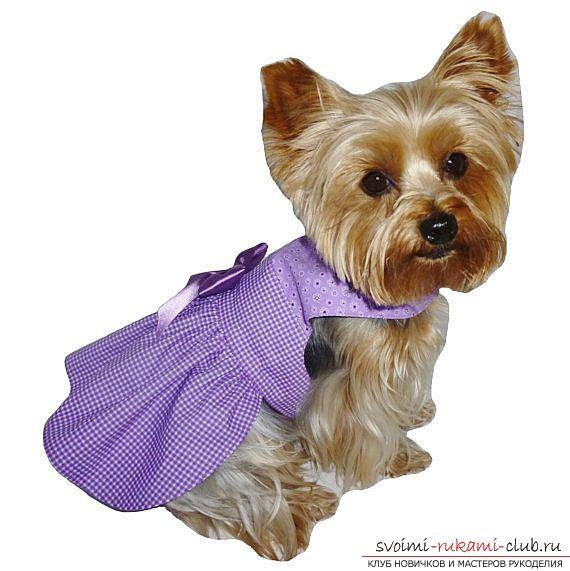 Выкройки одежды для собак помогут раскрасить унылые будни стильными нарядами собаки 20 фотографий