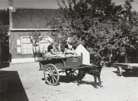 Vrouwen in Walcherse dracht op een hondenkar 1