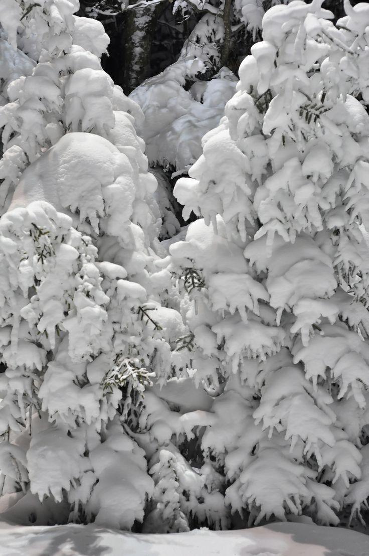 https://i.pinimg.com/736x/e0/05/01/e00501d2d38b9deb3dc35a8694607941--snow-scenes-winter-scenes.jpg