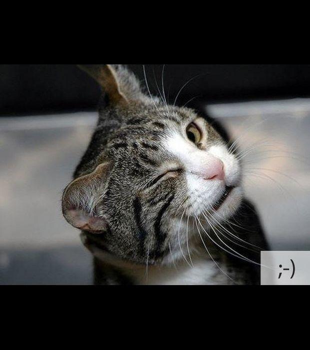 Ce chat pourrait représenter l'émoticône du clin d'oeil