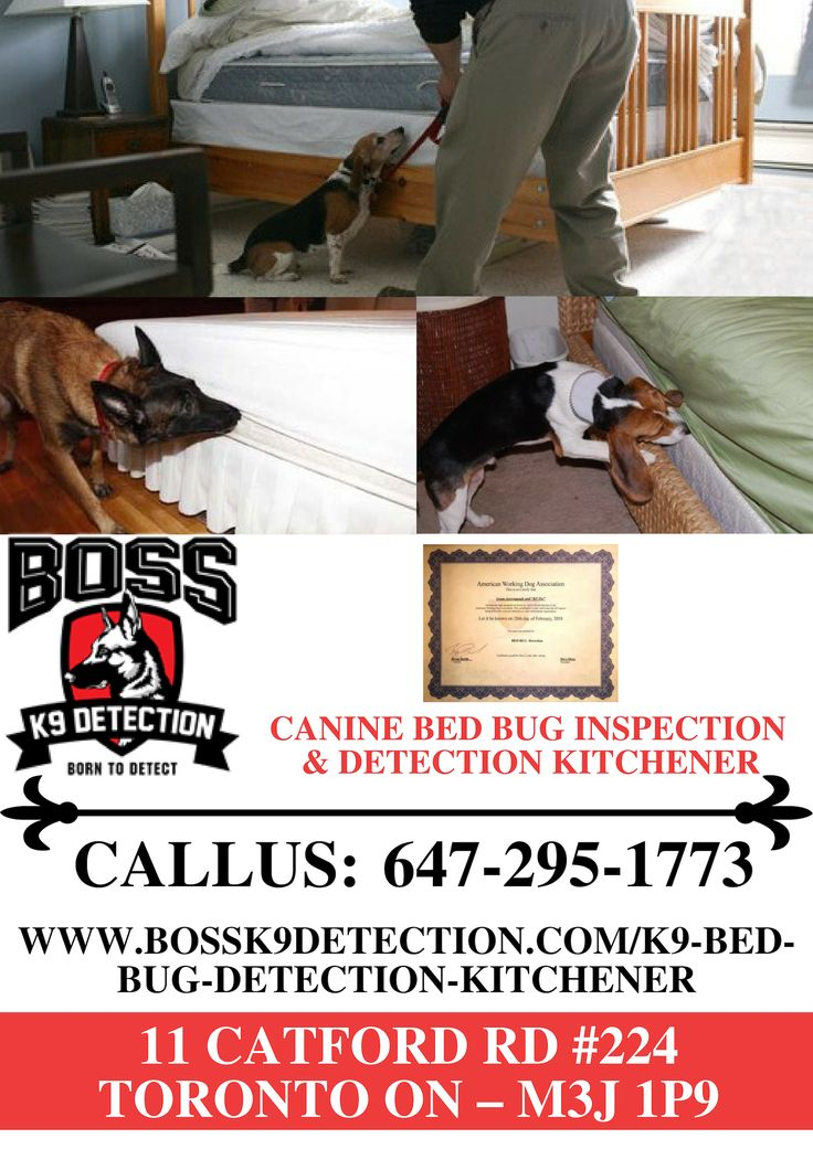 Canine Bed Bug Inspection & Detection Kitchener Bed bugs