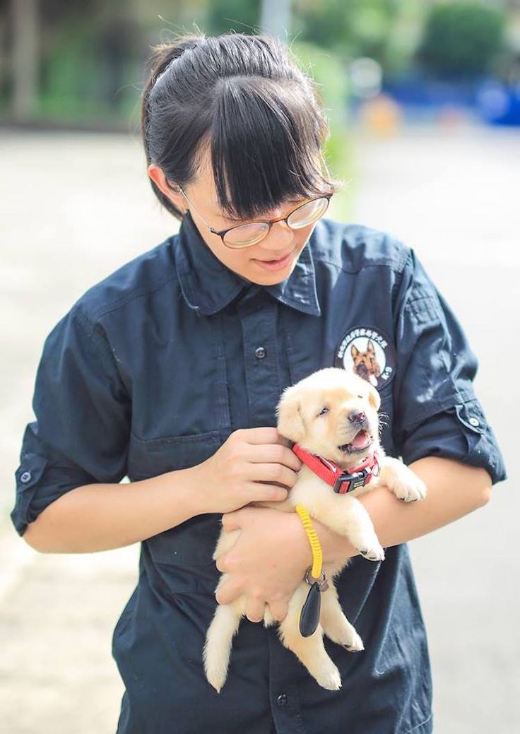 Best Dogs Cats Animals Images On Pinterest Bullies Bebe - The internet cant get enough of the taiwan police forces newest k9 recruits