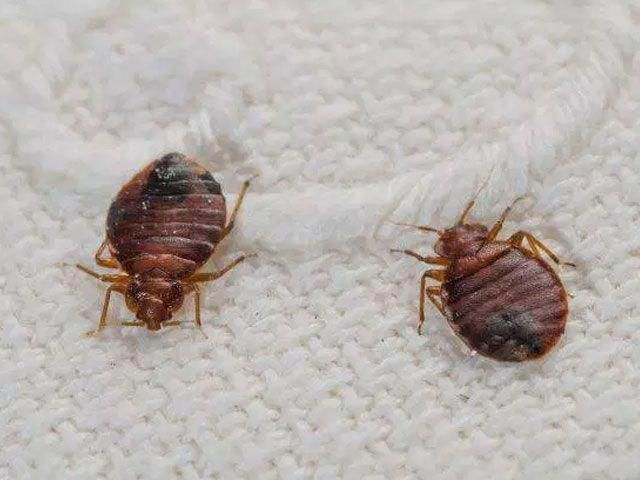 bed bugs pest control mission - 640×480