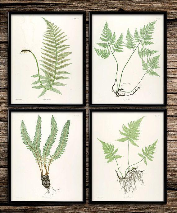 Fern Botanical Set | Vintage Prints | Botanical Print | Kitchen Decor | Home Office Decor | Printable Wall Art | Vintage Wall Art | Download