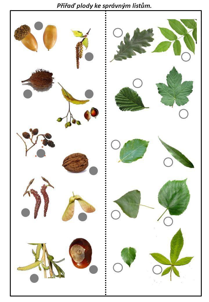 Výsledek obrázku pro poznávání listů