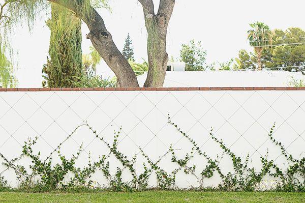 Growing some green things - jasmine vines trellis on wall. espalier