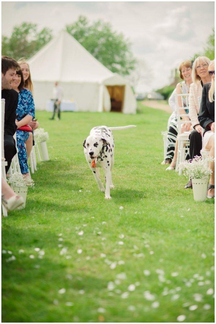 best dalmatians wedding images on pinterest geek wedding