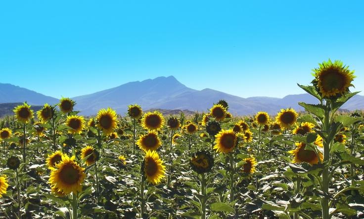 Agustina Montecia - Comarca Turística Sierras de la Ventana