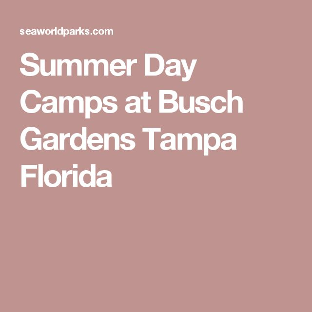 ideas about Busch Gardens Tampa on Pinterest Tampa florida
