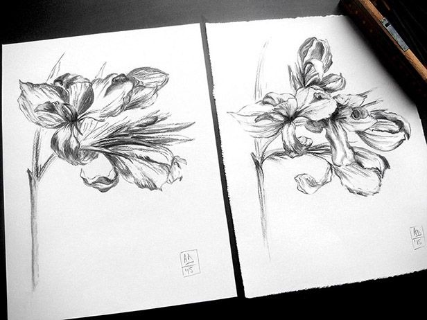 I was so long fascinated by this plant, by its magnificent florescence and its dance in the space… Here are two life drawings in charcoal of the same flower, 2 days apart.