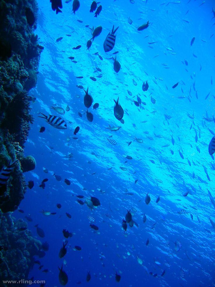月からも見えるサンゴ礁「グレート・バリア・リーフ」‐オーストラリアの絶景・名所‐