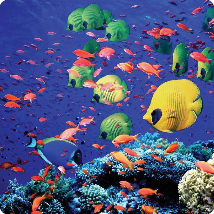Κοραλλιογενείς ύφαλοι σε εξωτικούς παραδείσους… Μια βουτιά σε πολύχρωμους βυθούς! http://www.expressholidays.gr/el/Exotic