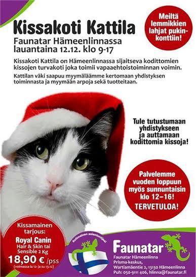 Kissakoti kattila on perustettu vuonna 1995 Kattila on kodittomien/löytökissojen turvakoti, joka sijaitsee lähellä Hämeenlinnan keskustaa, vanhan perunajauhotehtaan tiloissa.  http://kissakotikattila.blogspot.fi/