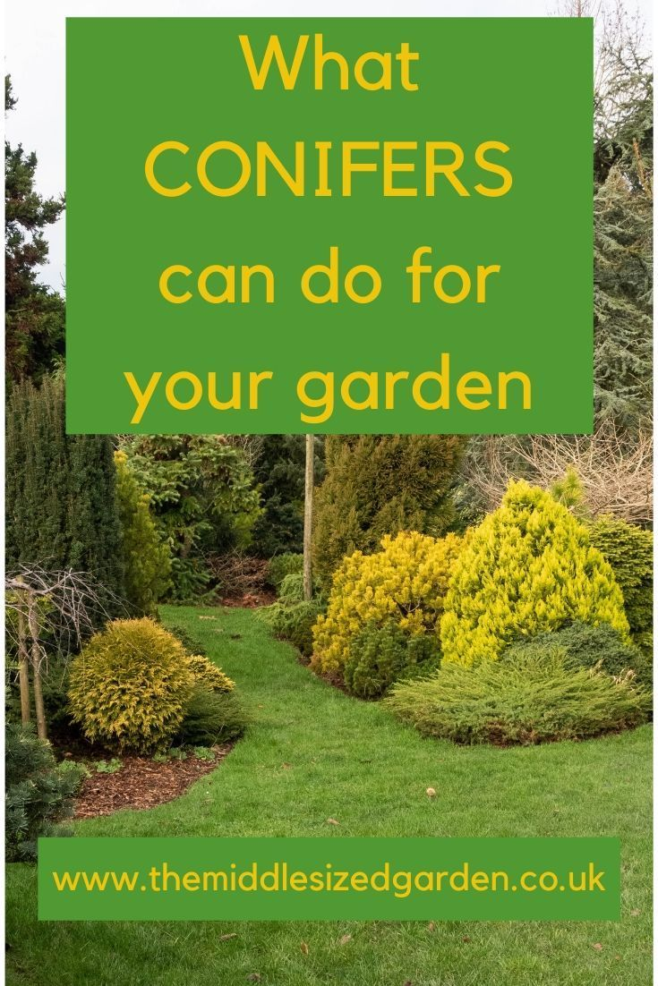 How Conifers Can Transform Your Year Round Garden Low
