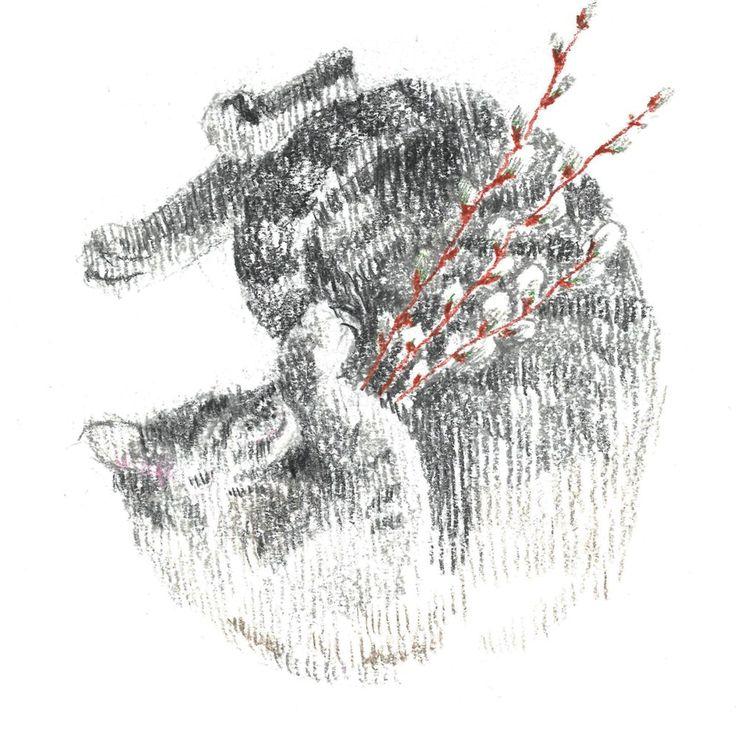 gray cat, sleep, pussy-willow, сolour pencils, graphic, illustration, draw, серая кошка, кошка спит клубочком, верба, графика, иллюстрация, цветные карандаши.