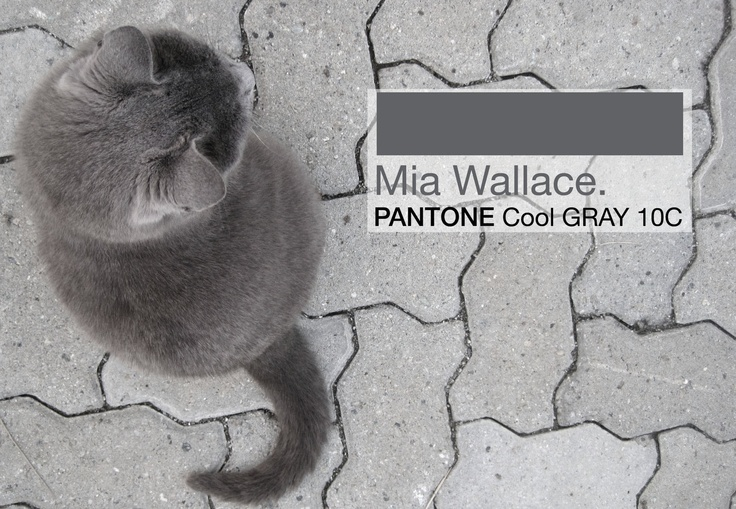 Mia pantone cool gray